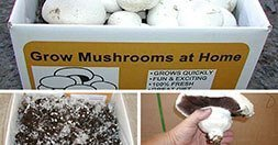 perfect mushroom growing kit