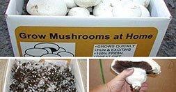 perfect mushroom growing kit
